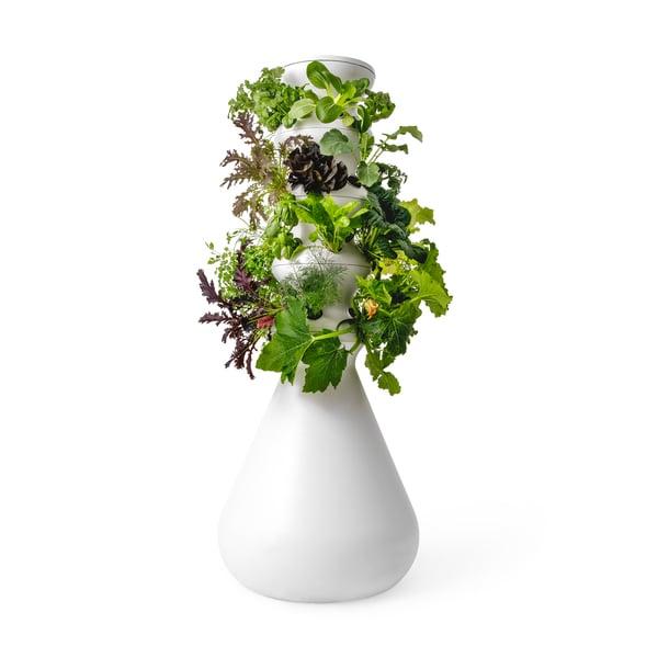 Lettuce Grow The Farmstand