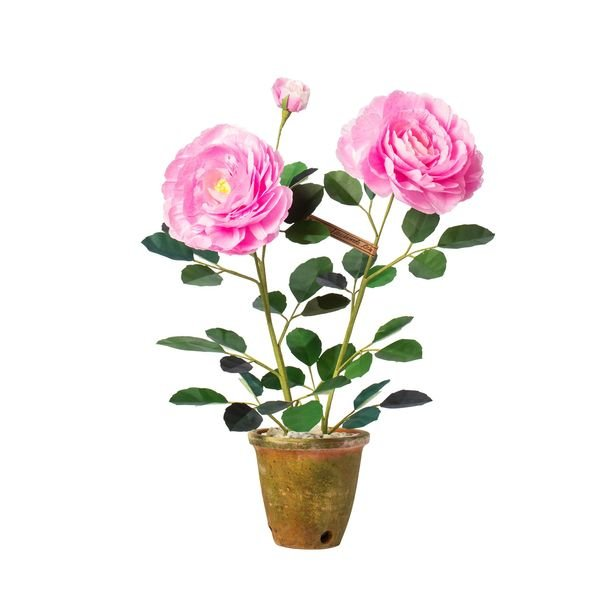 The Green Vase Floribunda Rose Plant