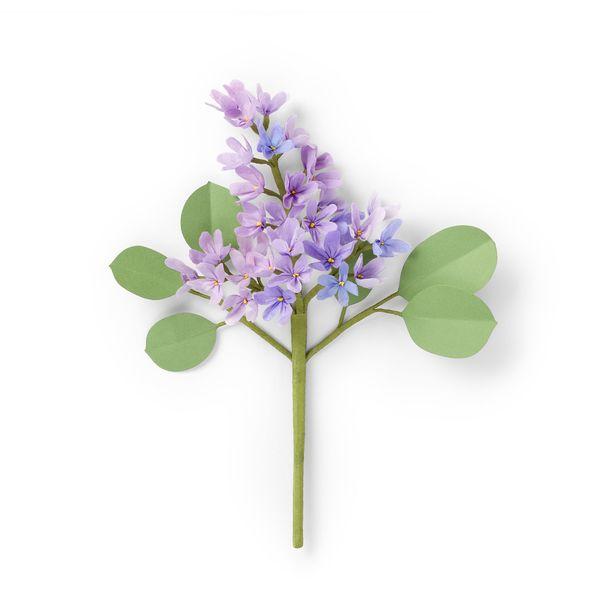 The Green Vase Lilac Stem